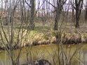 Na nádraží Častolovice je možné vidět jen v době, kdy listí ještě neobalilo stromy a keře