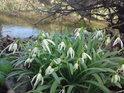 Podél břehu je možné na počátku dubna spatřit mnohé květy, co potěší srdce