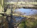 Alba zásobuje svojí vodou malé mokřady po svém levém břehu a tak se přirozená lávka přes jeden takový odtok právě hodí