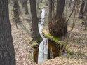 Odtok z dalšího rybníka v Houkvici má barvu slatin, ale na Šumavě opravdu nejsme