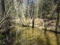 Především kořenům starých stromů vděčí Alba za stabilitu břehů