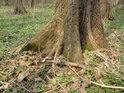 Pozornému návštěvníku jistě stromy napoví, že ne vždy byla vodní hladina právě v těch místech, co je nyní